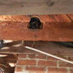 Deficiency: Notched joist. This effectively weakens the floor joist and may cause settlement.